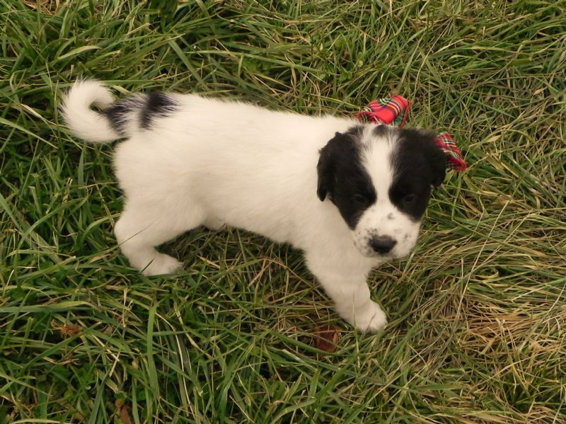 PUPPY #1 FEMALE  **SOLD*** Brenda L. - Previously Sold Dog Puppy