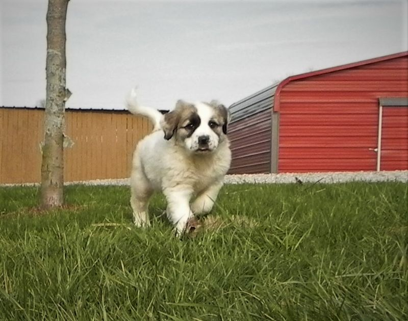 ESTER'S #2 FEMALE***SOLD*** Maria & Patrick Y. - Previously Sold Dog Puppy